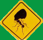 Leafcutter ant crossing logo